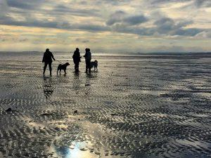 Menschen und Hunde bei einer Wattwanderung auf Sylt