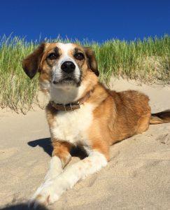 Mein HUnd Leni am Strand auf Texel