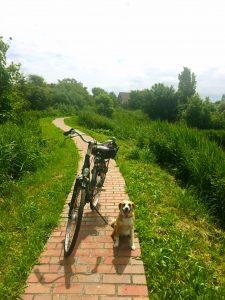 Fahrrad und Hund auf wunderschönem Fahrradweg